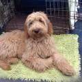 Puppy beurt – Max-