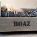 Boaz in de Soesterduinen