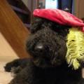 Zwarte piet Robbin